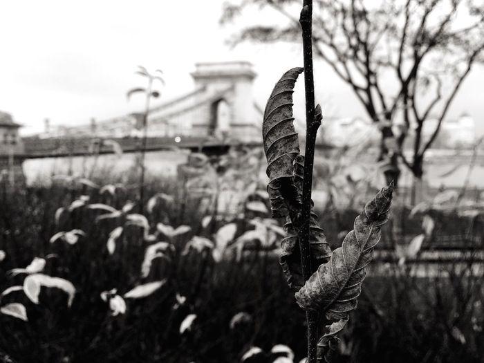 Blackandwhite Tree Leaves Chainbridge Winter Life