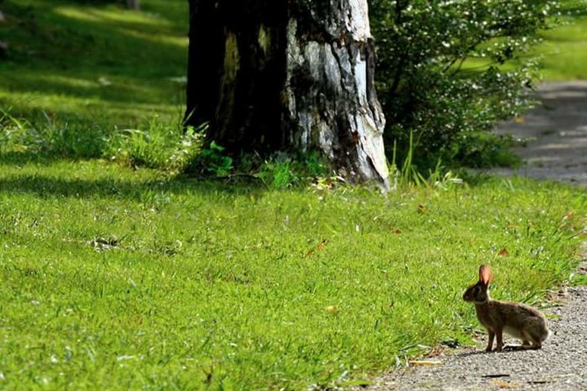 Bunny 🐰 Walking Around Relaxing Taking Photos Nature Photography Caryville Tennessee Hidden Gems  Green Summer ☀ Summer 2016 Escaping