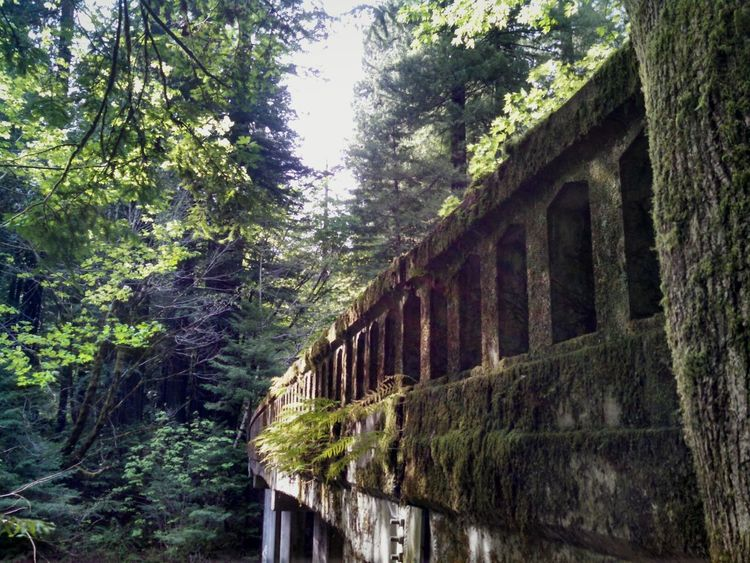 Nature Taking Over Again Old Highways Redwoods Taking Photos Enjoying Life Hanging Out Things I Like Mylife Having A Moment Its Hard To Be Me ; But Life Goes On . Mypointofview Exploring Forgotten Abandoned Humboldt County Smartphonephotography Motorola Lobuephotos Mobile Photography Still Life Eyemtravel