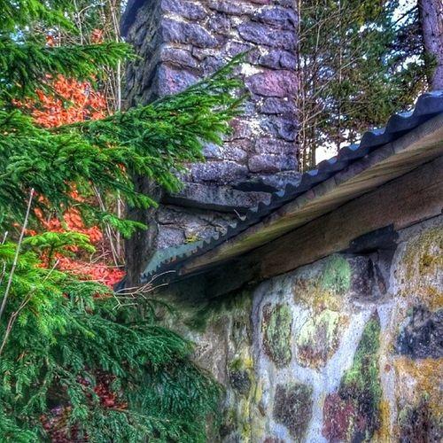 Stuga Skorsten Skog Siml ångsdalen hejhalmstad 7dagarbilden internationalpictures halland halmstad höst höstdag fall autumn sverige