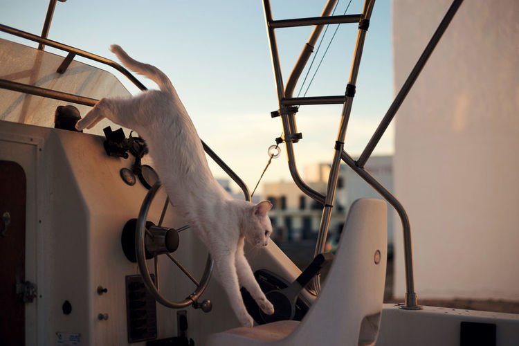 Close-Up Of Cat On Yacht