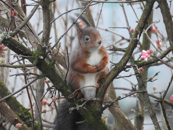 This squirrel just sat there and enjoyed the time - just relaxed. Tree Animal Themes Branch Plant One Animal Animal Vertebrate Mammal Focus On Foreground Animal Wildlife Animals In The Wild Day Nature No People Looking At Camera Portrait Looking Low Angle View Outdoors Whisker