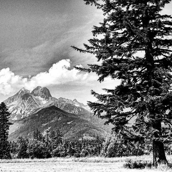 High Tatras mountains Hightatras  Trees Loves_rural_trees Lory_bw Bnw_planet Bnw_captures Bnw Bnw_landscape Insta_svk Insta_bw Bnw_rose Tree_magic