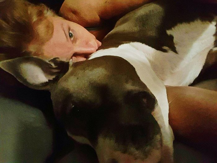 Sexygirl Pure Breed Pitbull No Location Needed
