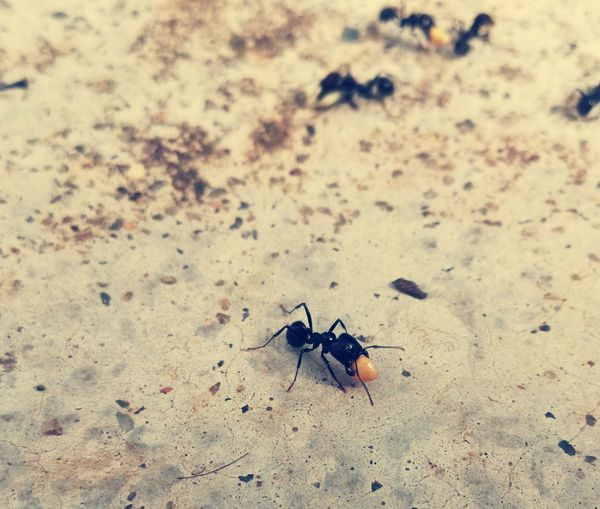 Small Insect Insect Animal Themes Ant One Animal Nature Close-up Animals In The Wild Outdoors No People Day Popular Popular Photographs Small Animal Tranquil Scene Beauty In Nature Fresh On Eyeem  Catch The Moment Tranquility Fragility Season  Nature