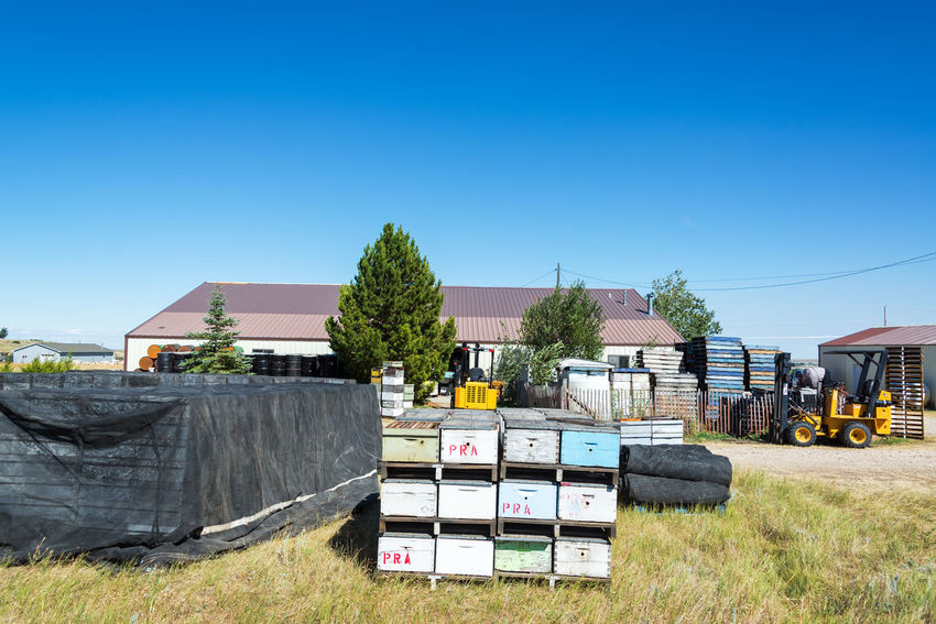 BUFFALO, WY - AUGUST 22: Beehives and other equipment used for beekeeping in Buffalo, WY on August 22, 2015 Apiary APIculture Bee Beehive Beehives Bees Box Boxe Buffalo Clear Sky Day Hive Machine Machinery No People Outdoors Palette Palettes Sky Tractor USA Wyoming