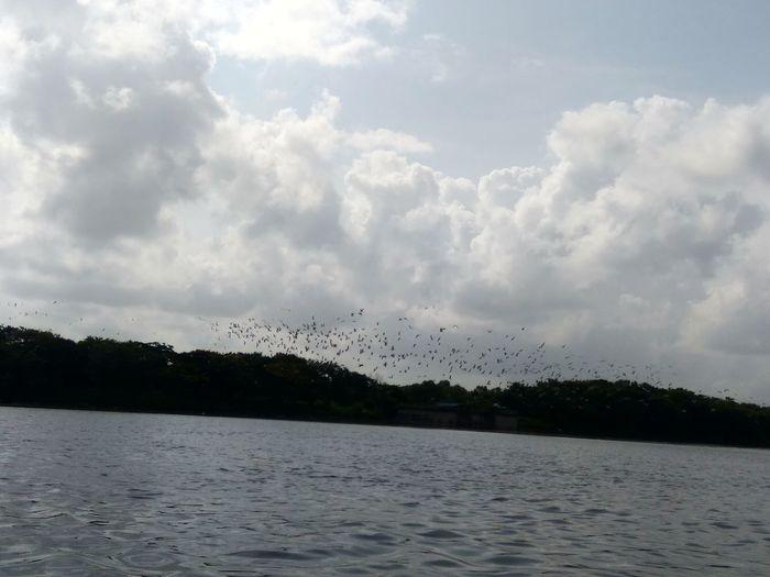Nature Bird Flying No People Flock Of Birds Beauty In Nature Cloud - Sky Sky Water