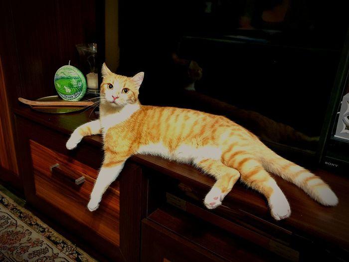 Kitty Cat Cat