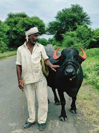 Indian Farmer with his buffalo. Buffalo Farmer Rural India Full Length Men Hygiene Agriculture Farm Animal Domesticated Animal Tag Livestock EyeEmNewHere This Is Strength