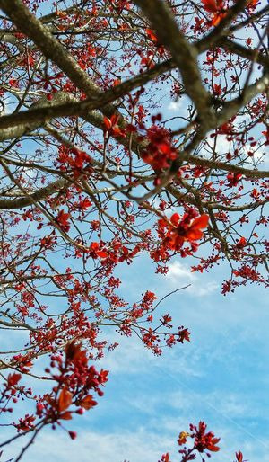 Tree Tree_collection  Tree Branches Tree Blossoms Tree Blooms Tree And Sky Branches Branches And Sky Branches And Blossom Spring Springtime Spring Blossoms Trees In Blossom Trees In Spring Springtime 2016