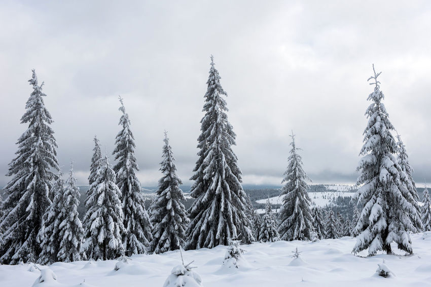 Christmas winter wonderland in the mountains. Fir trees covered with snow Christmas Fairy Winter Mountains Winter Vacation Winter Landscape Wintertime Xmas Beauty In Nature Cold Temperature Day Fir Trees Idyllic Nature No People Outdoors Scenery Scenics Snow Snow Covered Landscape Snow Covered Trees Winter Winter Holidays Winter Magic Winter Trees Winter Wonderland