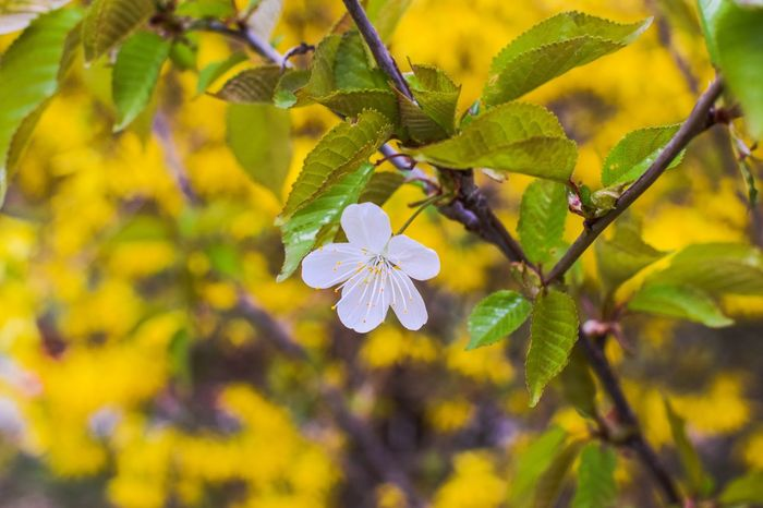 Hello spring! Nature Nature Photography Naturelovers Naturelover Springtime Spring Flower Flowers Colors Nikon Nikonphotography NIKON D5300 Germany Regensburg Bavaria Bayern Plant