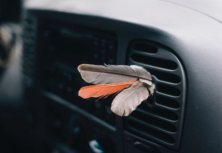 Close-up of orange feather on car window