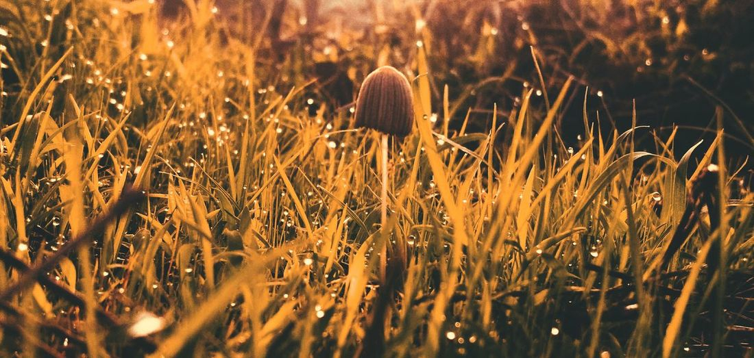 standin tall First Eyeem Photo Awesome EyeEm Gallery Wildlife & Nature EyeEm Best Shots Morning Light Macro Morning Rainy Days Nature_collection Awe Dew EyeEm Nature Lover EyeEmNewHere Nature Close-up Plant Sky Growing Farmland Cultivated Land Agricultural Field Fungus