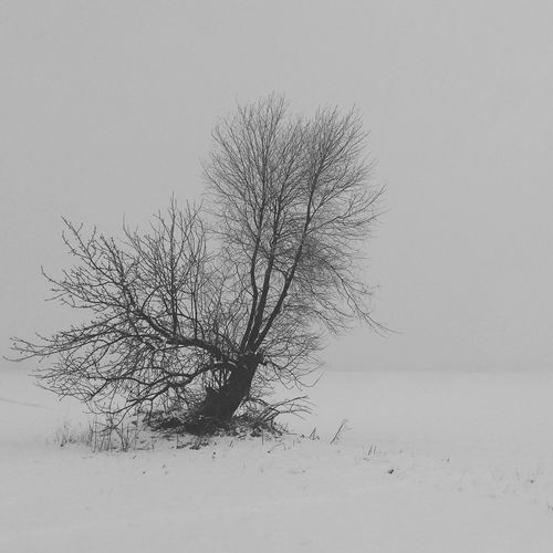 Blackandwhite Black And White Mobile Photography Black & White B&w Poland Black&white Warsaw Samsung Galaxy S4 EyeEm The Best Shots This Week On Eyeem Village Landscape Tree Lonely Tree Wilanów Fog Foggy Morning Winter Snow