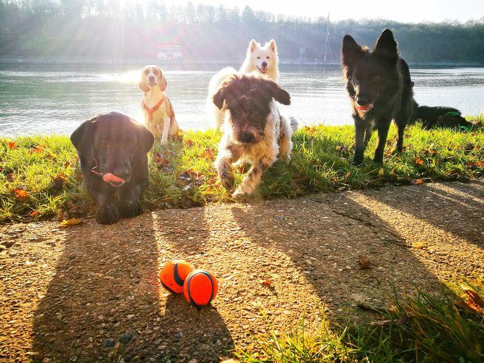 Dogstagram Dogs Of EyeEm Dogs Playing  Rudelführer RudeL Dogs Kita Water Pets Friendship Dog Full Length Motion Sunlight Retriever Fun Young Women Beagle Border Collie Labrador Retriever