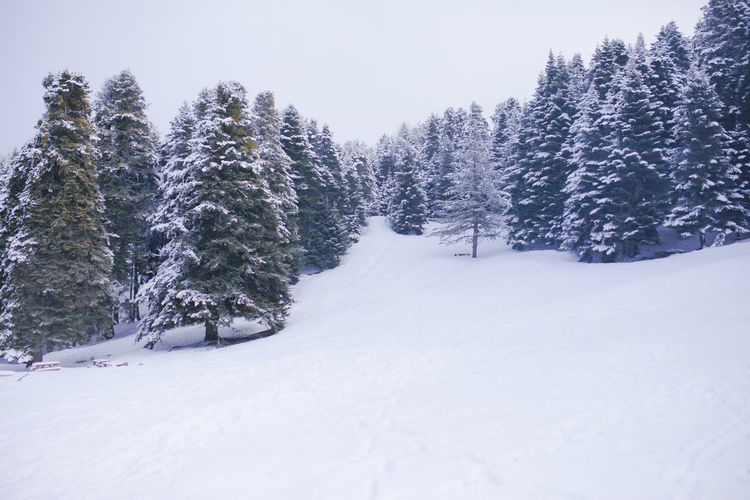 Winter Snow Winter Cold Temperature Plant Tree Beauty In Nature Tranquility Tranquil Scene White Color Scenics - Nature Land No People Sky Covering Field Nature Non-urban Scene Growth Day Coniferous Tree Snowing White Winter Ice