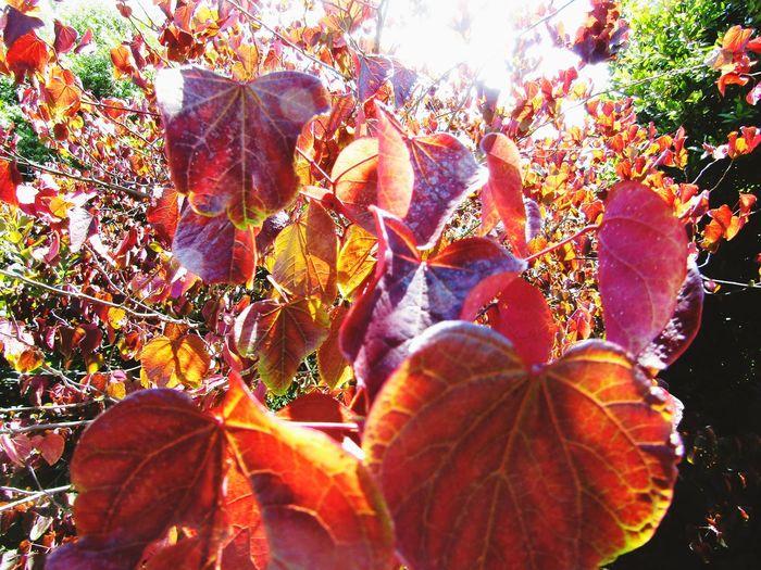 Orange leaves Outside Outside Photography No People Zero People Leaf Close-up Plant Leaves Leaf Vein
