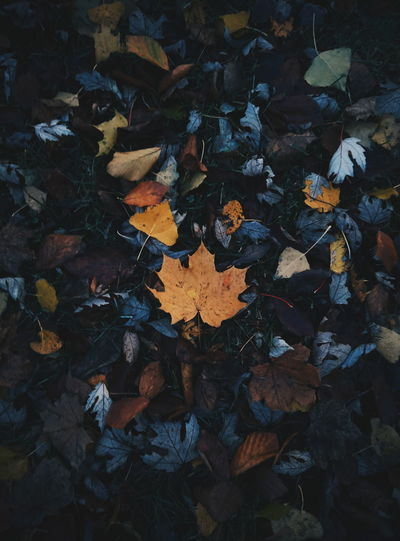 autumn leaves Landscape EyeEm Best Shots EyeEm Best Shots - Nature Beauty In Nature Nature Minimalism EyeEm Best Edits Autumn colors Colors Tree Leaf Autumn Backgrounds Close-up