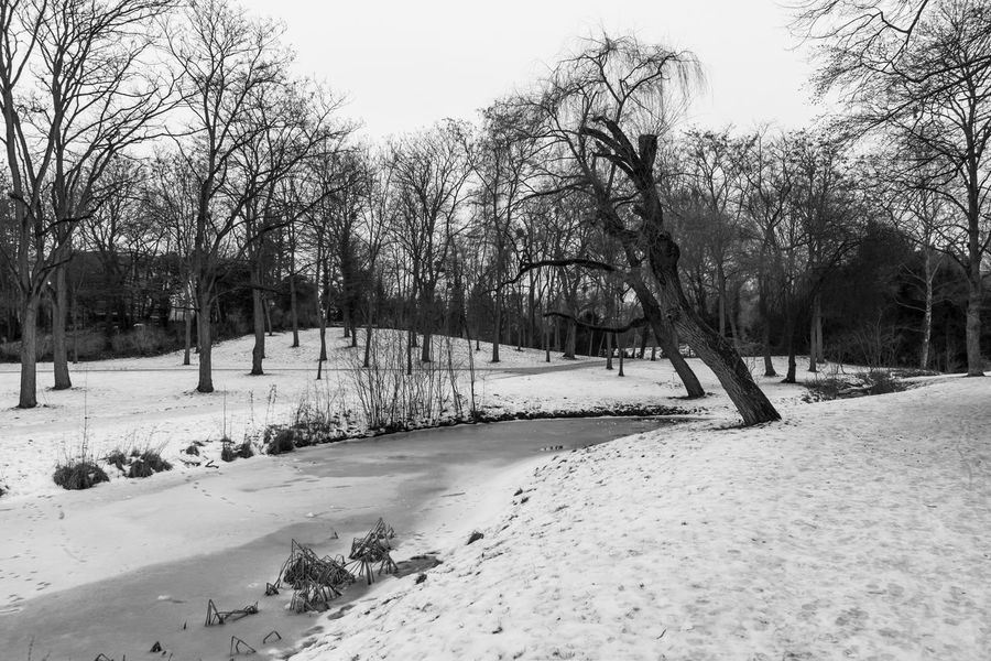 Berlin Blackandwhite Cold Days Cold Temperature Day Frozen Nature Monochrome Nature Outdoors Schwarzweiß Snow Tree Winter Zehlendorf