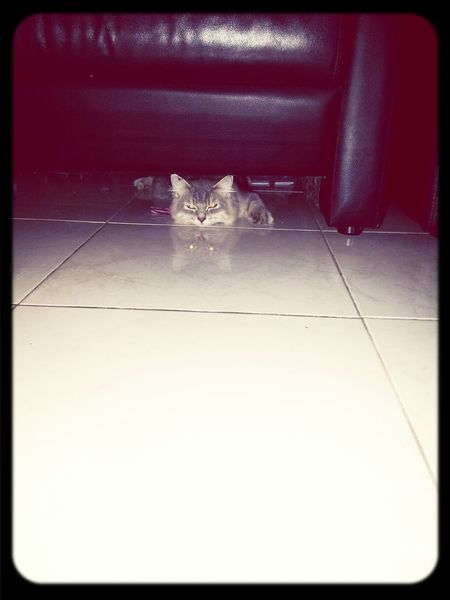 hi...my name is Pretty Buntat....(*¯︶¯*) Cat Just Shoot