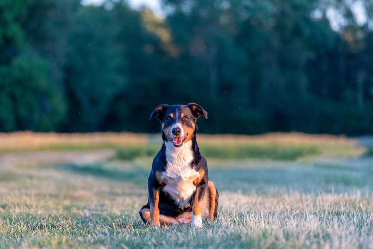 Dog running on field