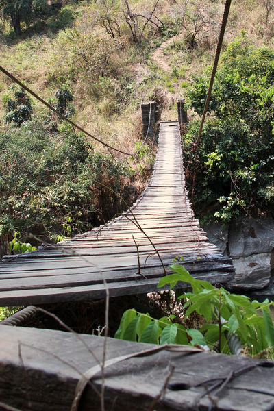 Beauty In Nature Day Footbridge Growth Nature No People Outdoors Plant Tanzania The Way Forward Tranquil Scene Tranquility Tree Wood Paneling