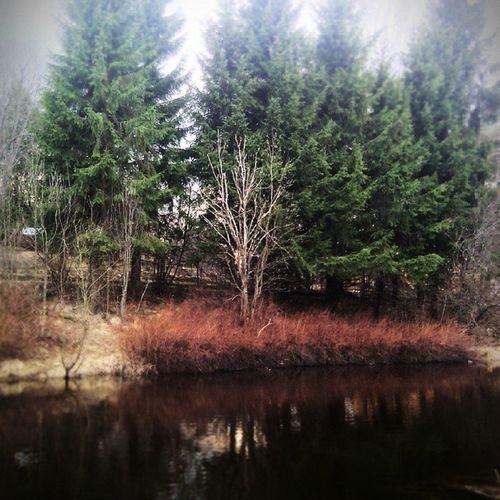 цвета река Лес красота