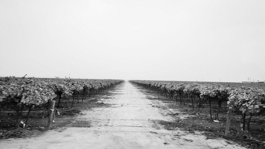 Wine Vinyard Blackandwhite Photography Samsung Galaxy S6 Edge Rural America Cellphone Photography Grape Vine Near And Far Lonely Road Rural Life Through The Windshield Rural Scenes Farm Travel EyeEm Best Shots - Black + White