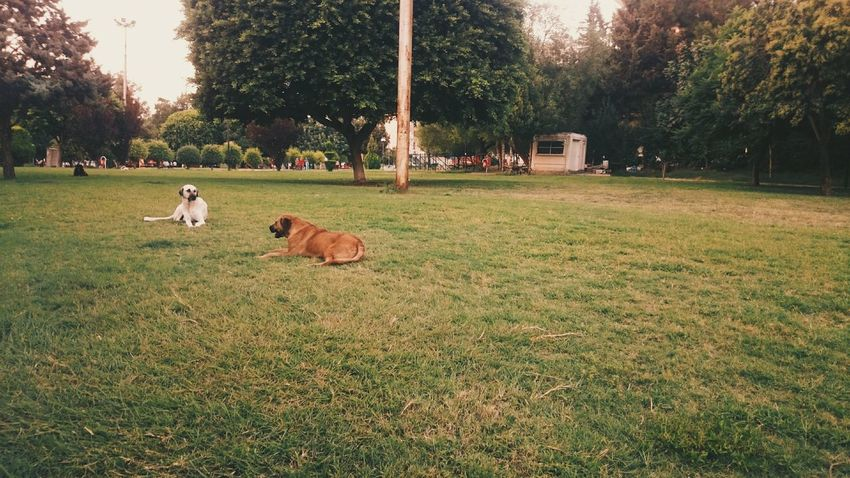 Color Palette Relaxing Relaxing Moments Outdoors Animals Animal Themes Dogs Park Life Green