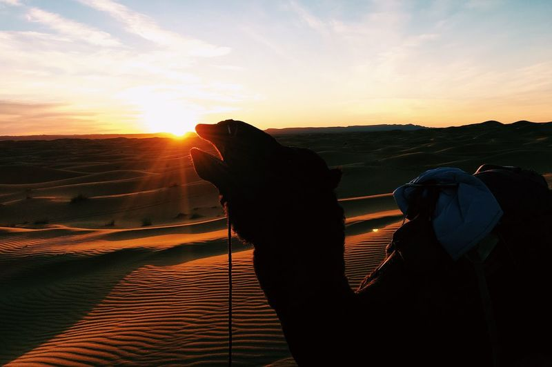 Sky Nature Photography Themes Photographing Beauty In Nature Sunset Mammal One Animal Photographer Camera - Photographic Equipment Cloud - Sky Outdoors Domestic Animals Technology Real People Leisure Activity Standing Scenics One Person Landscape Desert Sand Camel