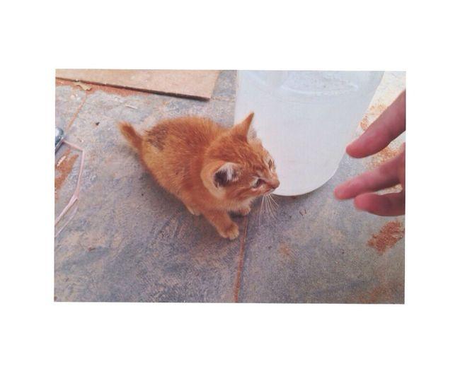 Kitten Cute Animals Meow