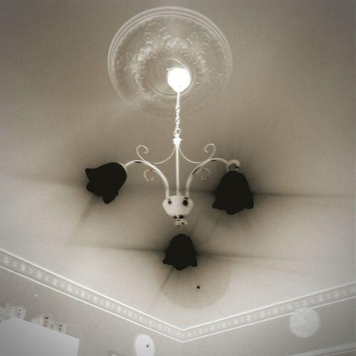 Black Rose negative luminar