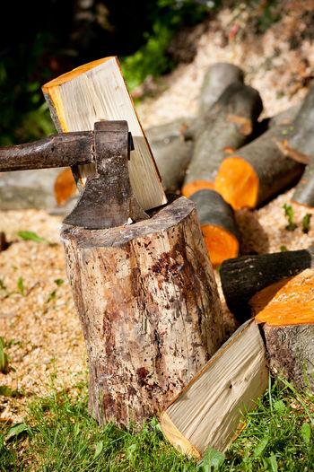 Close-up of log on tree stump