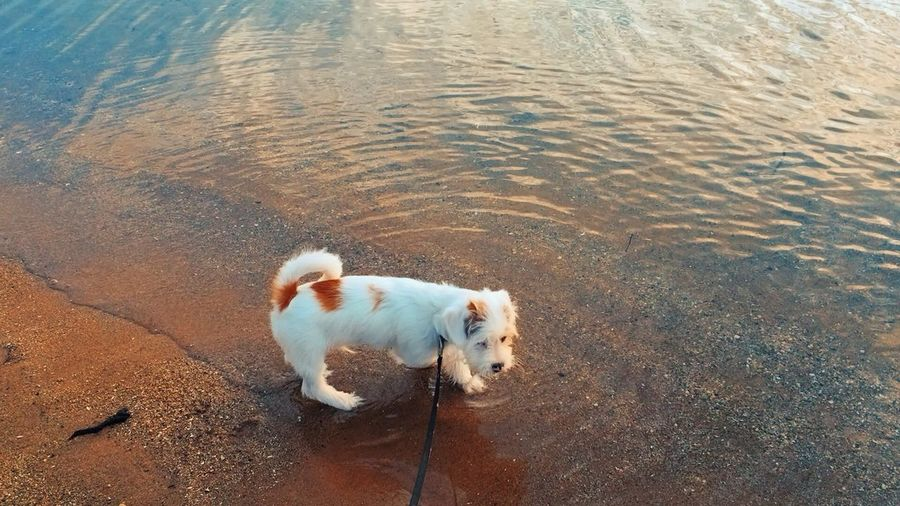 Cute Dog  Cute Pets Beautiful Colors Water White Puppy Dog EyeEm Selects Beach One Animal High Angle View Nature No People Water Day Outdoors