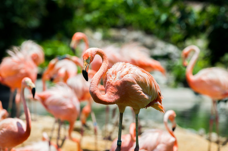 Beauty In Nature Bird Photography Birds_collection Birdwatching Close-up Day Flamingo Focus On Foreground Nature Outdoors Pink Wildlife