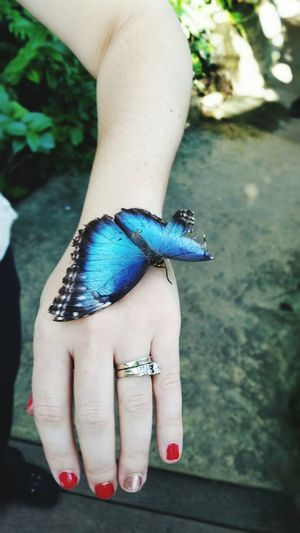 Close-up of butterfly on woman hand