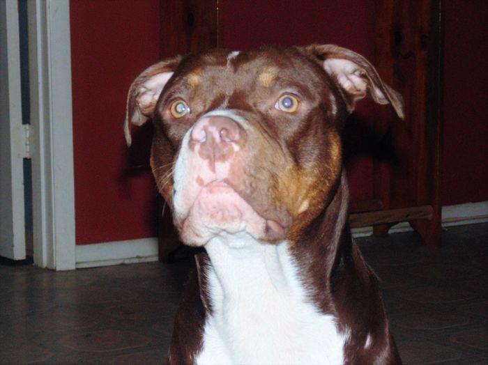 Crockett, Tx Cute Pets Dog My Photos Pets Taking Photos My Photos ♥ Crockett,tx Petslife Petselfie