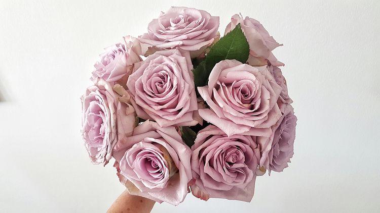 Flowers Rose - Flower Flower Head Flower Rosé Nature Flower Arrangement Bouquet Close-up Blume🌸 Blumenpracht🌺🍃 Blumenstrauß Blumenfotografie Blume