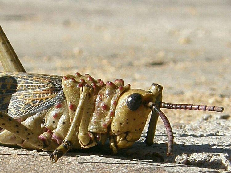 Insekt Tierwelt Insect Photography Animal World Tierfotografie