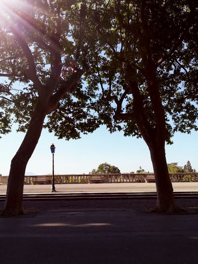 Tree Nature Montpellier South Of France Occitanie Sky Outdoors Peyrou France🇫🇷 LanguedocRoussillon Sud De La France No People Tranquility Hérault Promenade Parc First Eyeem Photo