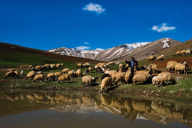 View of sheep on landscape against sky