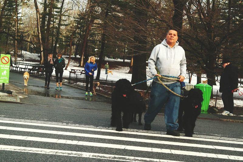 Nyc dog walker At Central Park