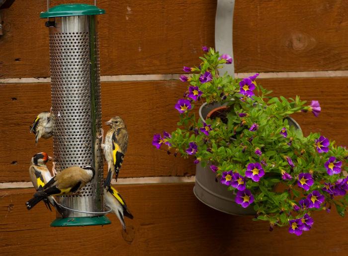 Birds perching on feeder