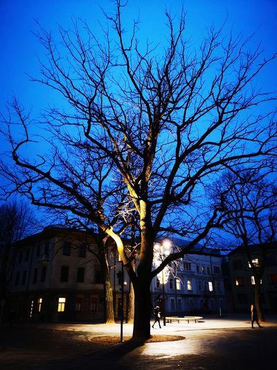 Illuminated tree City Tree Bare Tree Blue Sky Architecture Building Exterior Built Structure Stationary Light Trail Street Light