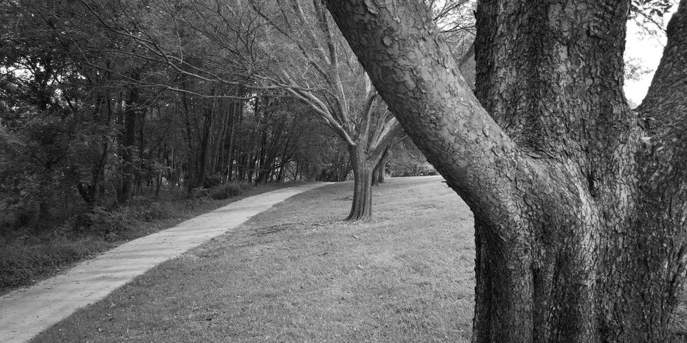 Tree lined path Park Monochrome #NoFilter P20 Pro Huaweiphotography Huaweip20pro Treelined Walkway Tree Trunk Pathway Woods