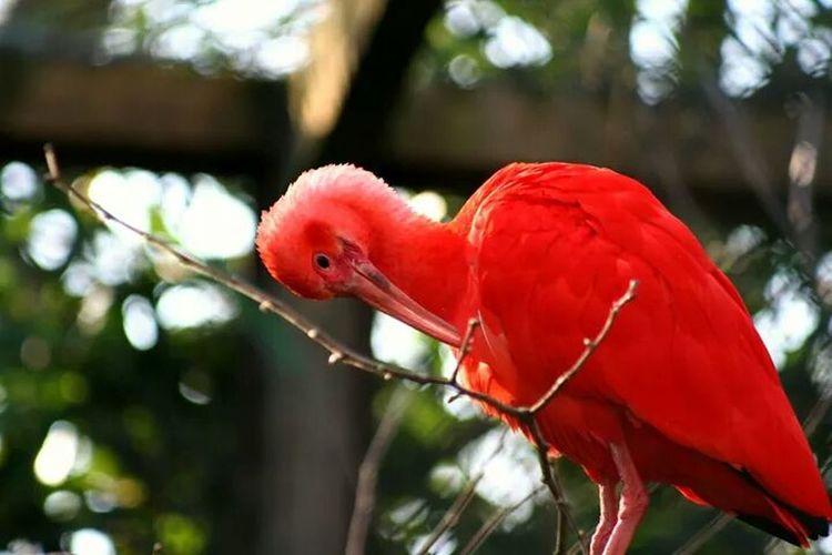 Orange Reddish Bird Zoo Animals Pretty