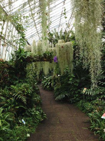Royal Botanic Garden in Edinburgh. Royal Botanic Gardens Botanical Gardens Scotland Edinburgh Garden Green Exotic Plants Walking Around Greehouse
