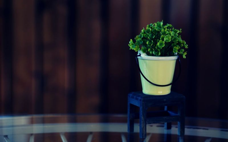 Green flower potted plant