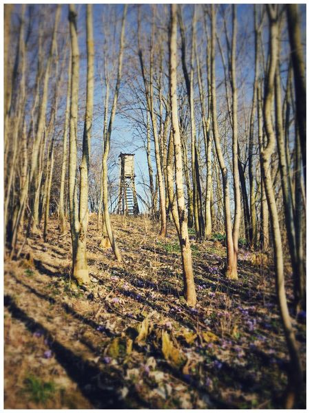 Henndorf Wallersee Forrest Forrest Photography Forrest Nature Spring Spring Flowers Springtime Nature Nature_collection Naturelovers EyeEm Best Shots EyeEm Nature Lover Trees Tree_collection  View Wald Waldspaziergang Waldweg Beautiful Nature Beautiful Day